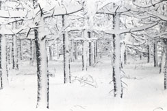 Winter photo from Tao Te Ching Jane English